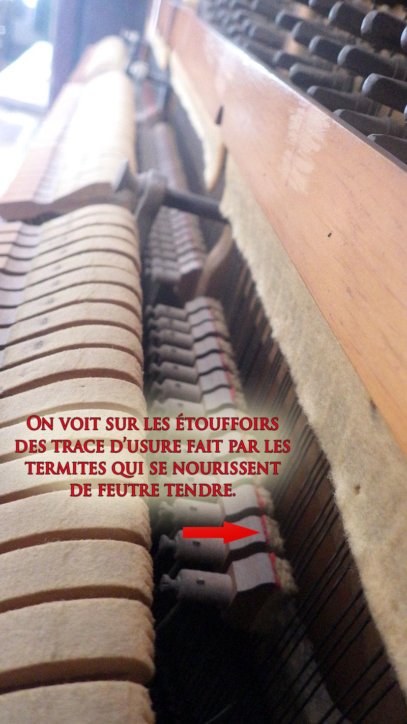 Termites dans le piano Newcombe